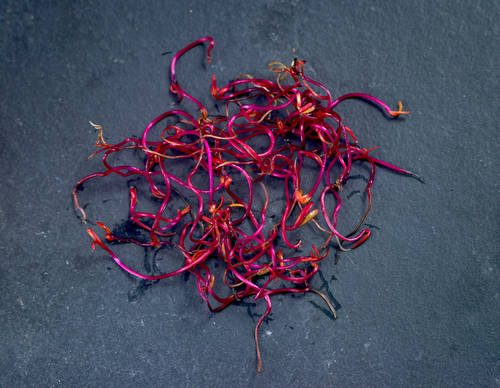 Micro salad Beetroot sprouts Reporters / Unlisted
